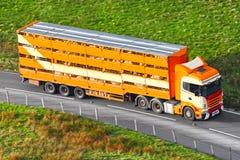 El ganado de los animales del campo en el camión transporta Imagen de archivo