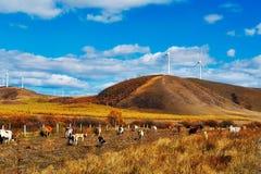 El ganado en los prados Fotografía de archivo