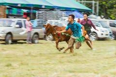 El ganado muestra 2013 Imagenes de archivo