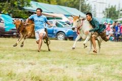 El ganado muestra 2013 Fotos de archivo