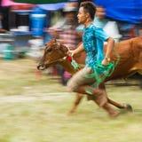 El ganado muestra 2013 Imagen de archivo libre de regalías