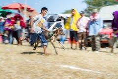 El ganado muestra 2015 Foto de archivo libre de regalías