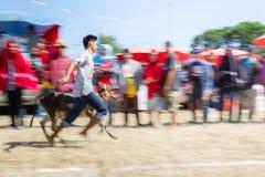 El ganado muestra 2015 Imagenes de archivo
