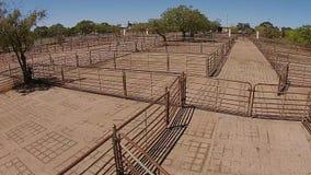 El ganado subasta la opinión aérea de las yardas metrajes