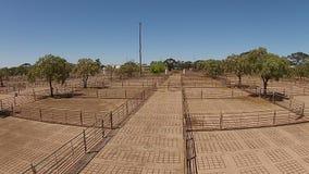 El ganado subasta la opinión aérea de las yardas almacen de metraje de vídeo
