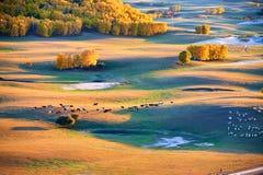 El ganado y las ovejas en los prados del otoño Fotografía de archivo