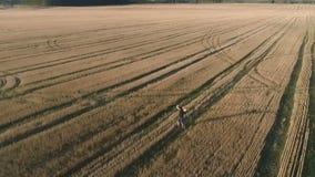 El ganador feliz acertado joven del hombre disfruta en el campo, brazos extendidos Visión panorámica aérea metrajes
