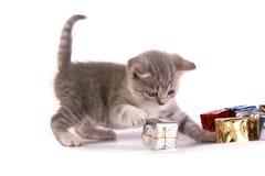 El gatito Imagen de archivo libre de regalías