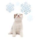 El gatito agradable mira los copos de nieve Foto de archivo