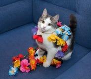 El gatito blanco con gris mancha juegos del adolescente con la guirnalda Imagen de archivo