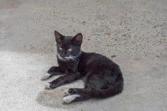 El gatito blanco y negro bonito se agachó en el piso fotos de archivo