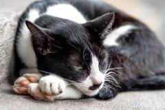 El gatito blanco y negro soñoliento está mintiendo en el piso foto de archivo