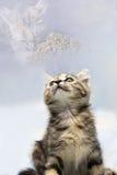 El gatito borroso abstracto tenga hambre Foto de archivo