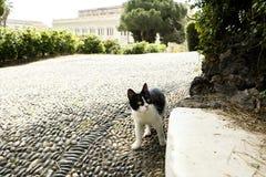 El gatito camina en el parque Fotografía de archivo