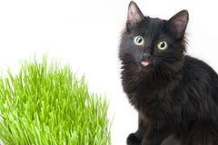 El gatito come una hierba fotos de archivo libres de regalías