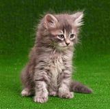 El gatito con el cono del pino de la Navidad y refleja 2 Fotos de archivo
