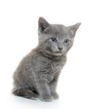 El gatito con el cono del pino de la Navidad y refleja 2 Imagenes de archivo