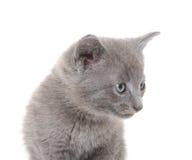 El gatito con el cono del pino de la Navidad y refleja 2 Foto de archivo