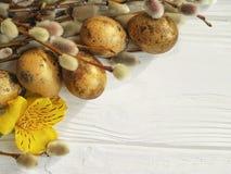 El gatito de las codornices eggs el sauce hermoso en un fondo de madera blanco de la decoración natural, alstroemeria de la rama  Imagen de archivo