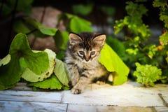 El gatito debajo de las hojas, gatito mira a escondidas hacia fuera de debajo una hoja, ocultación del gatito Imágenes de archivo libres de regalías