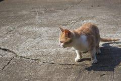 El gatito del color anaranjado Imagen de archivo libre de regalías