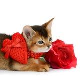 El gatito del tema de la tarjeta del día de San Valentín con el corazón rojo y subió Fotografía de archivo