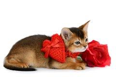 El gatito del tema de la tarjeta del día de San Valentín con el corazón rojo y subió Fotos de archivo libres de regalías