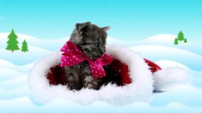 El gatito divertido con el arco rosado que mira alrededor y sube, copia el espacio almacen de metraje de vídeo