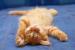 El gatito duerme en la parte posterior imagenes de archivo