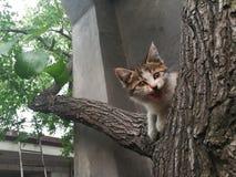 El gatito en el árbol fotos de archivo libres de regalías