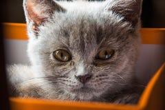 El gatito encantador ha despertado y se está sentando en la caja imagen de archivo libre de regalías