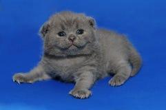 El gatito es adorable recién nacido, lindo Imagen de archivo libre de regalías