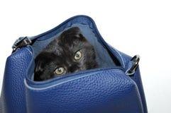 El gatito es negro Los escoceses doblan negro Gato Gato en el bolso foto de archivo