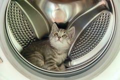 El gatito escocés gris lindo se está sentando en una lavadora Imagen de archivo
