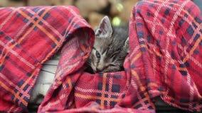 El gatito está dormitando metrajes