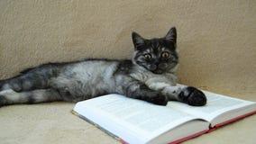 El gatito gris miente en un libro abierto