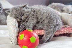 El gatito juega con una bola ilustración del vector