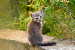 El gatito jugaba en hierba y dado vuelta a la c?mara imagen de archivo