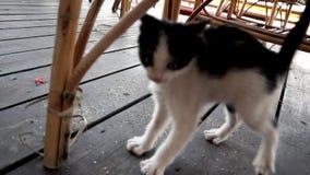 El gatito juguetón lindo está corriendo a una cámara almacen de metraje de vídeo