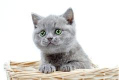 El gatito mira para arriba Imágenes de archivo libres de regalías
