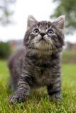 El gatito mira para arriba Imagenes de archivo