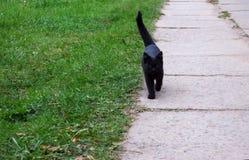 El gatito negro está corriendo en el camino Fotos de archivo