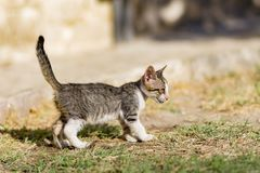 El gatito perdido Fotos de archivo libres de regalías