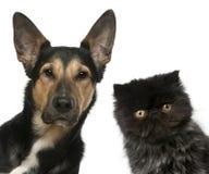 El gatito persa y Mezclado-cría el perro delante de Foto de archivo libre de regalías