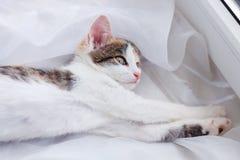 El gatito pone en el travesaño de la ventana y la mirada hacia fuera de la ventana Foto de archivo libre de regalías