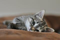 El gatito que pone encendido apoya del sofá Imagen de archivo libre de regalías