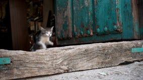 El gatito que salta en la cámara lenta estupenda, lazo-lista almacen de video