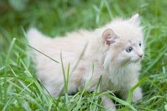 El gatito recorre en la hierba Imagen de archivo libre de regalías