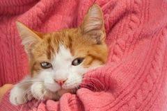 El gatito rojo joven se sienta en las manos Fotos de archivo libres de regalías