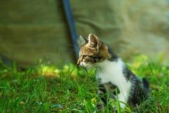 El gatito se está sentando en la hierba, y está mirando a un lado Imágenes de archivo libres de regalías